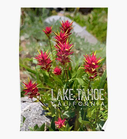 Paintbrush at Lake Tahoe, CA Poster