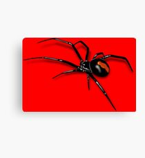 Redback Spider Black Widow Canvas Print