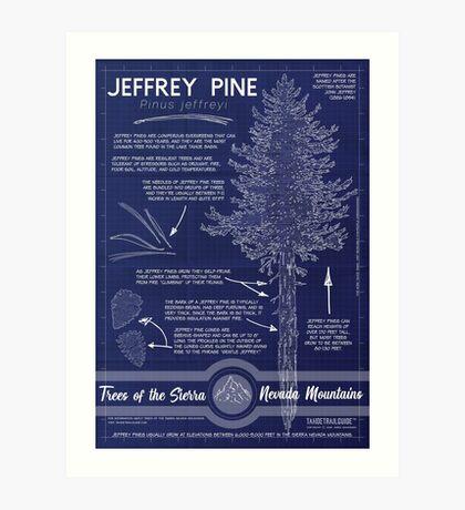 Jeffrey Pine (Pinus jeffreyi) Infographic Art Print