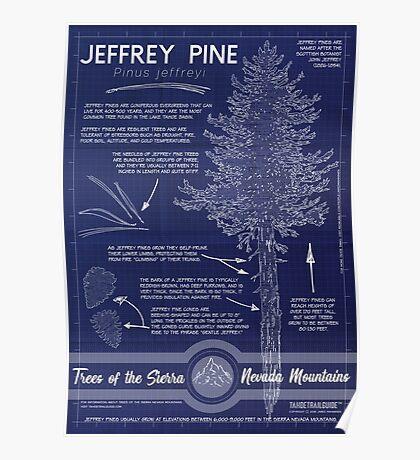 Jeffrey Pine (Pinus jeffreyi) Infographic Poster
