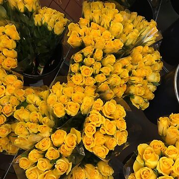 Yellow roses photography by foljajohn