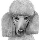 Poodle - standard - portrait by doggyshop