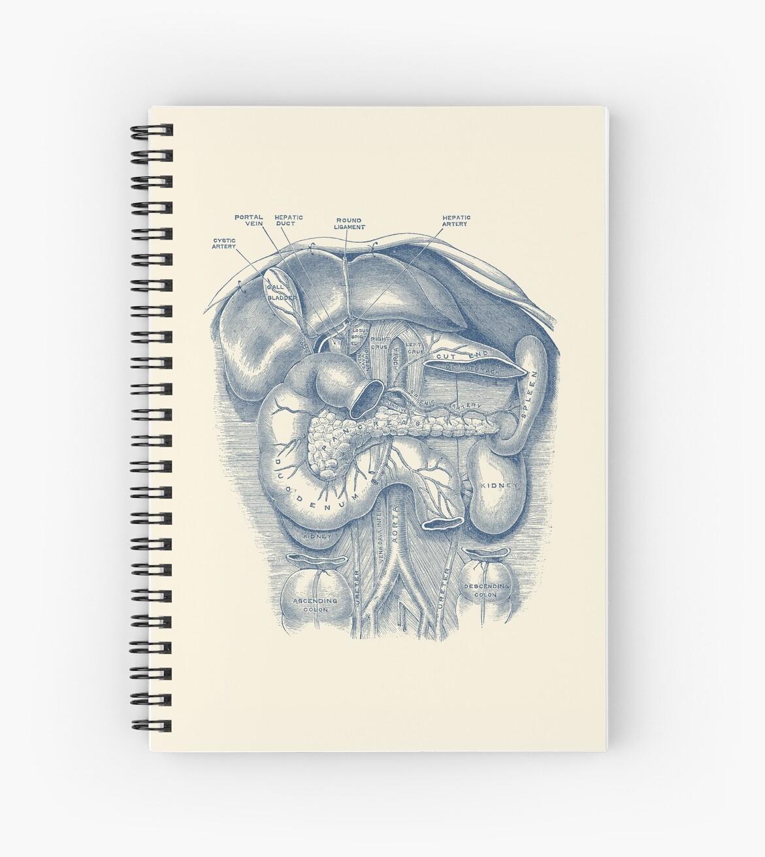 Cuadernos de espiral «Anatomía Digestiva Humana - Diagrama Vintage ...