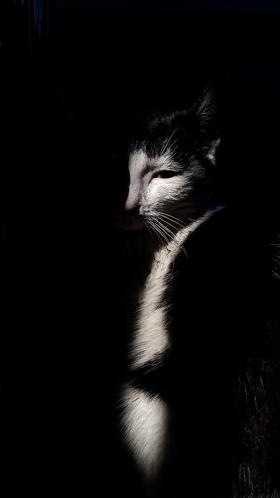 Hidden Cat by ColorsOfAutumn