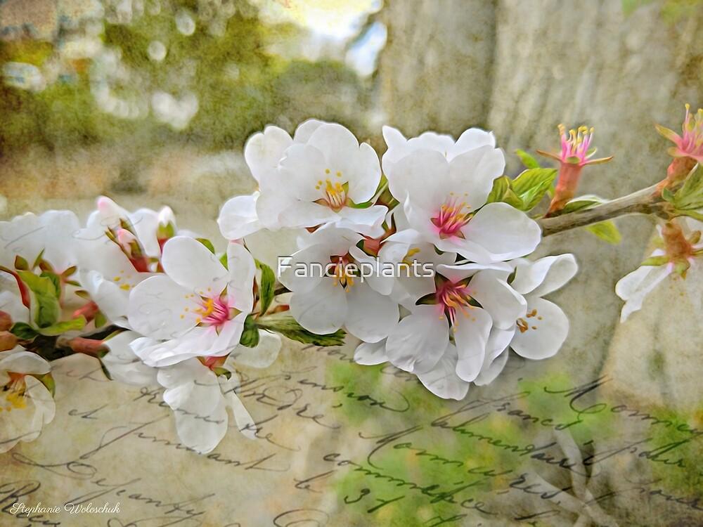 Bloomin Spring by Fancieplants