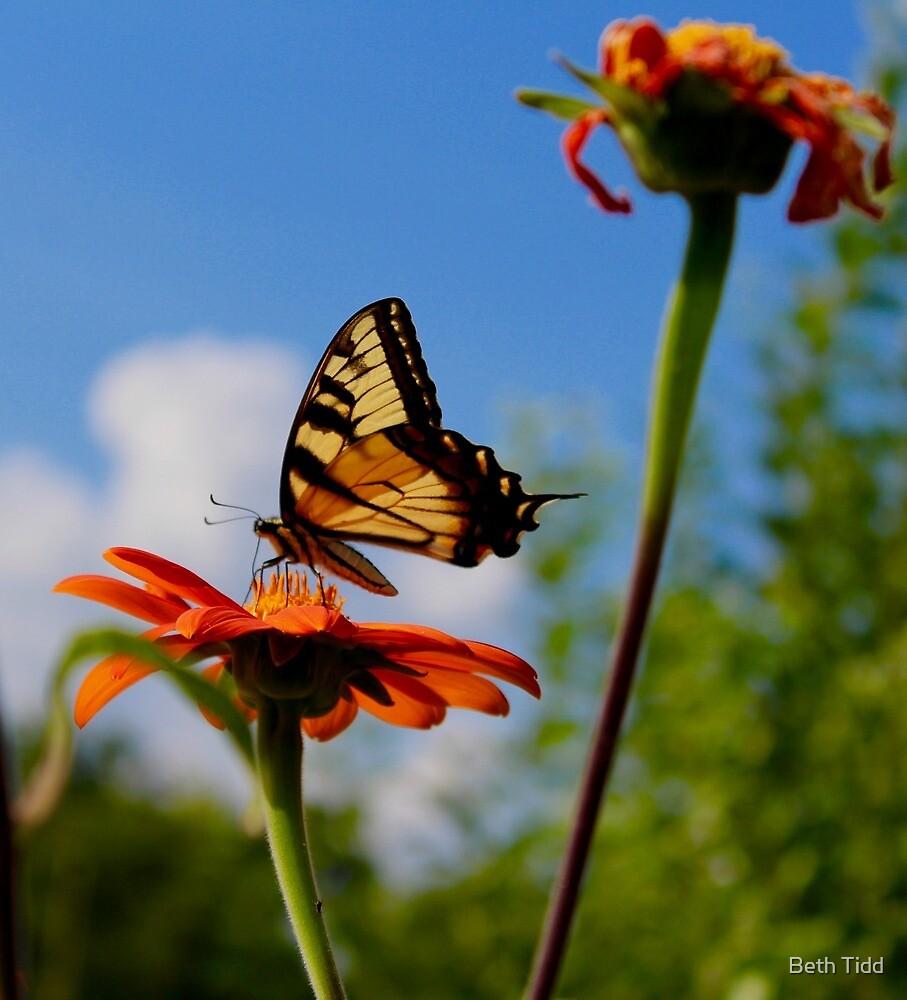 Butterflies life by Beth Tidd