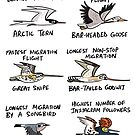 World Records by Migratory Birds by rohanchak