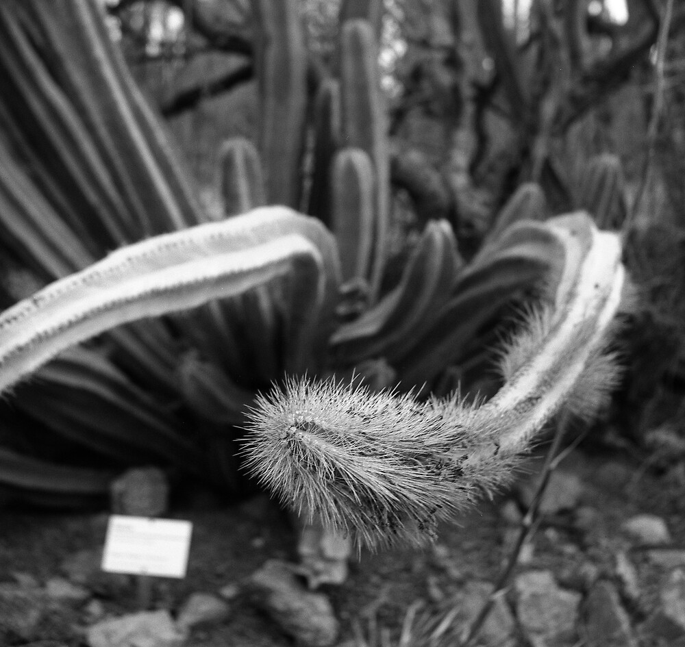 Twisted Cactus by James2001