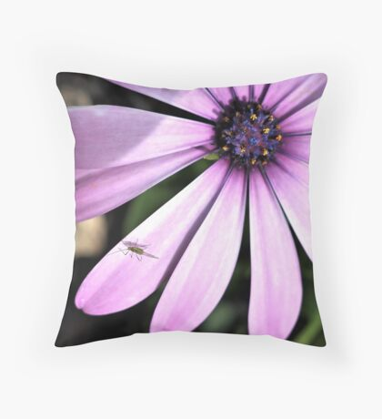 African Daisy and Guest Throw Pillow