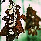 Autumn Leaf  by murrstevens