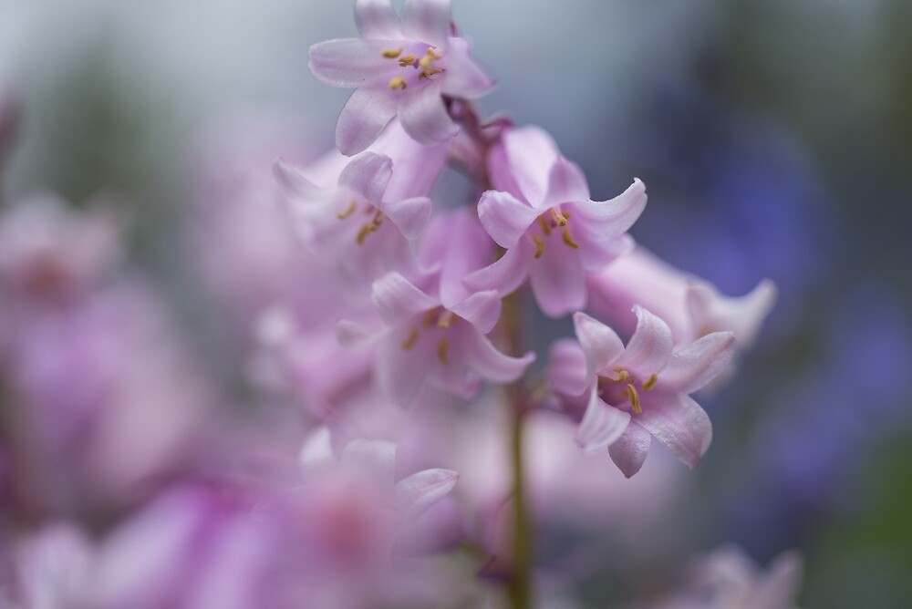 Petal Moments 11 by Ray Cheung