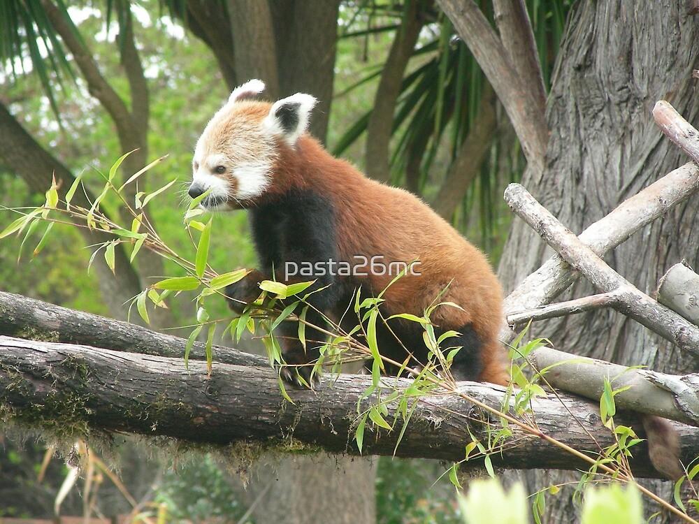 Red Panda 001 by pasta26mc