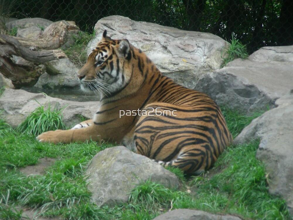 Tiger 001 by pasta26mc