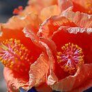 Tangerine by Catherine Davis