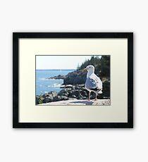 The Maine Gull Framed Print