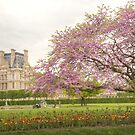 Tuileries Gardens in the spring of 2018 by Michael Matthews