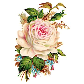 Beautiful Rose (Vintage) by pete372b