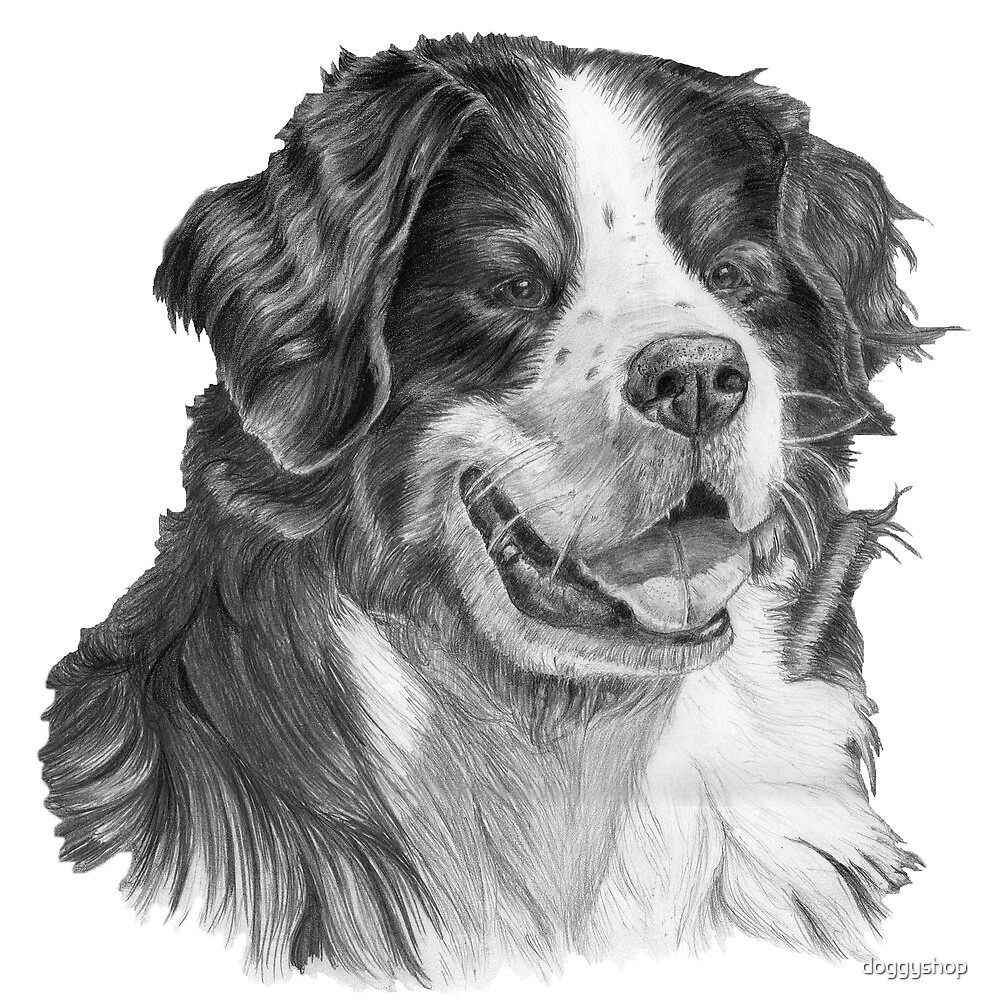 Bernese mountain dog. Swiss dogbreed by doggyshop