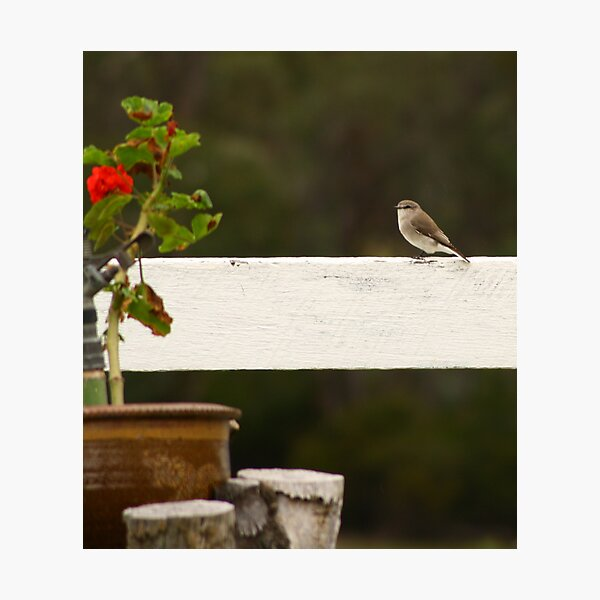 Little Wren Photographic Print