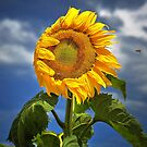 1776 Sunflower and Bee by Hans Kawitzki