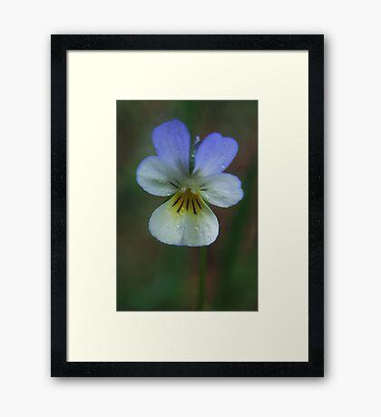 Wild flower in spring Framed Print