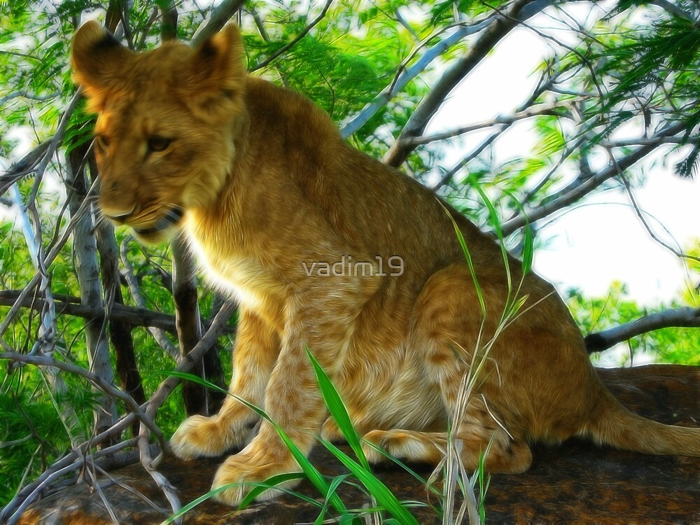 Lion Cub, Zambezi National Park, Zimbabwe by vadim19