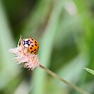 Spot the insect... by Jeanne Horak-Druiff