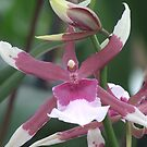 orchid 2 by Lolabud
