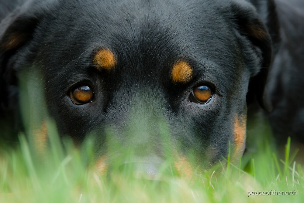 A Low Down Dog by peaceofthenorth