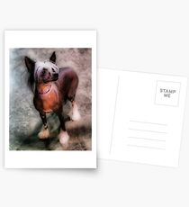 Chinese Crested Postcards