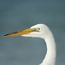 White Egret's Profile by Virginia N. Fred