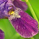 Up Close Iris by Rick  Friedle