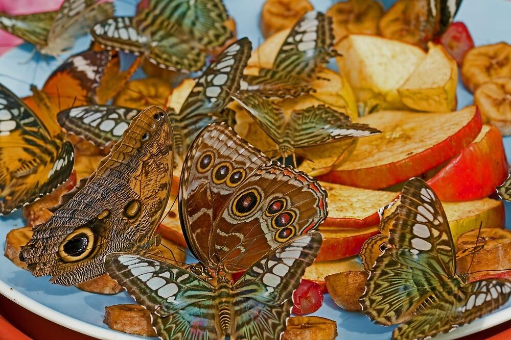 Butterfly Breakfast by Margan  Zajdowicz