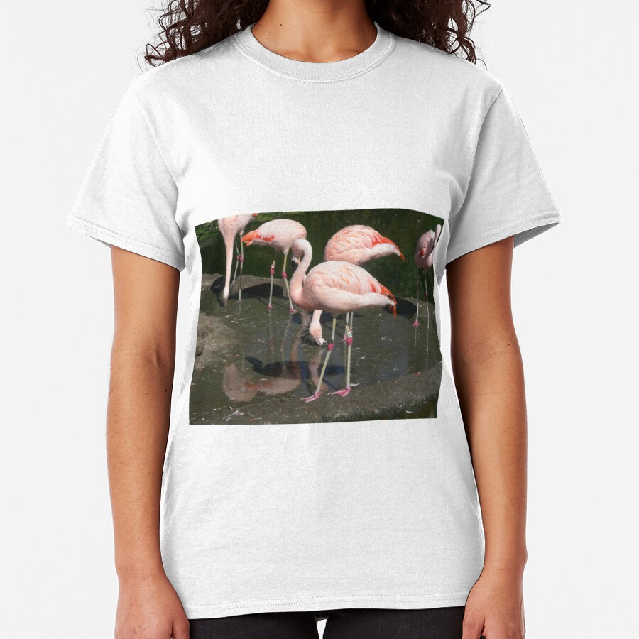 Flamingos birds 003 Classic T-Shirt