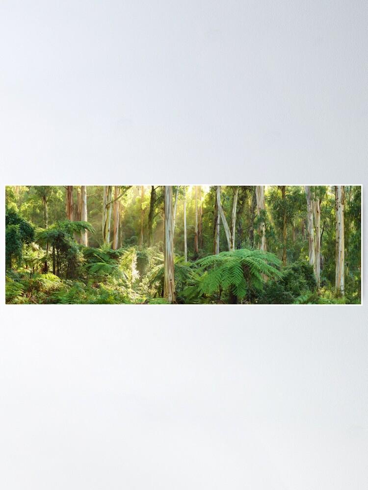 Alternate view of Dawn Lights The Dandenongs, Australia Poster