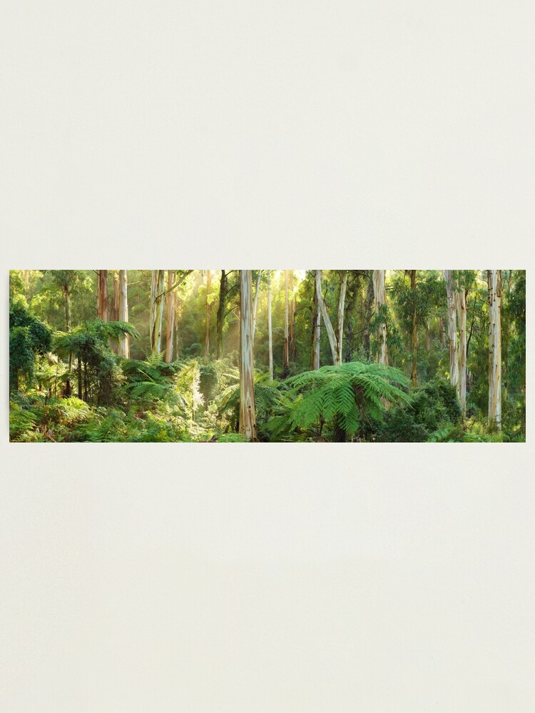 Alternate view of Dawn Lights The Dandenongs, Australia Photographic Print