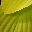 plante grasse by william lyszliewicz