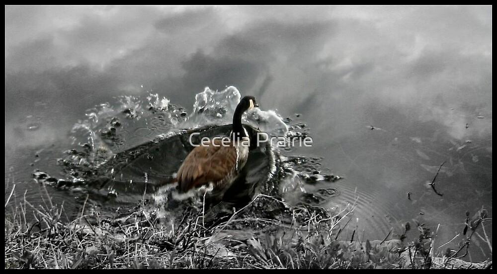 Splash by Cecelia Prairie