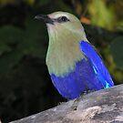 Bright Blue by Sean Jansen