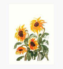Sonnenblume Aquarell 2018 Kunstdruck