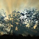 Montagu Bushfire , nor west coast Tasmania , Australia by phillip wise