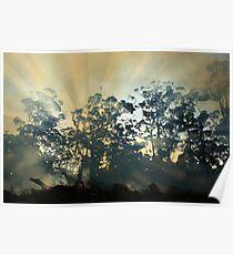 Montagu Bushfire , nor west coast Tasmania , Australia Poster