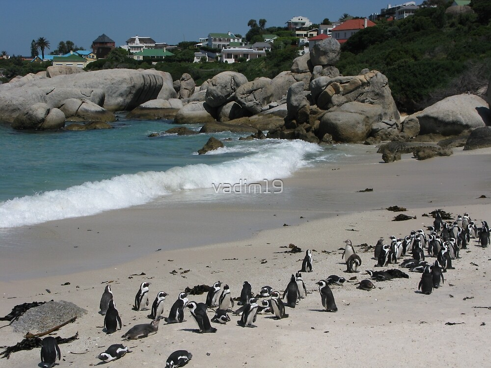 Boulders Beach, Table Mountain National Park, South Africa by vadim19
