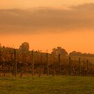 Sunset on Vines by Di Jenkins