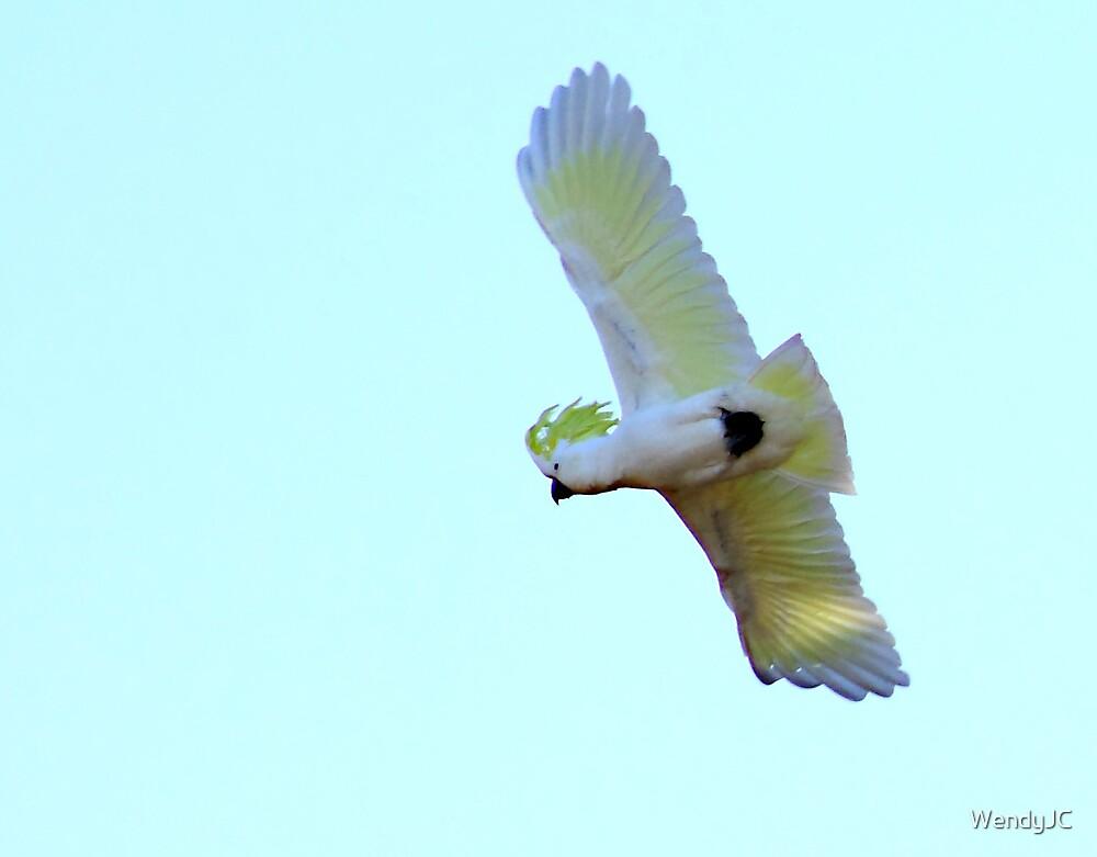 Gotta Fly by WendyJC
