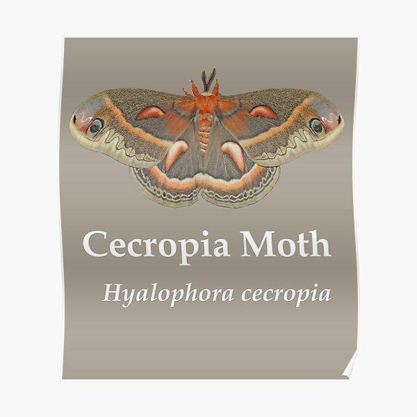 Cecropia Moth - White Lettering Poster