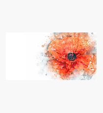Flower Flower Red Photographic Print