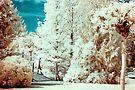 Erdotelek (Infrared) by zolim