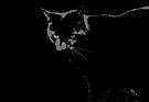 Black Cat 1 - Card by Etakeh