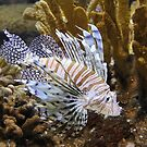 Lion Fish by vette
